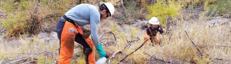 Wild Stew Field Crew members work on tamarisk eradication in Arnett Creek